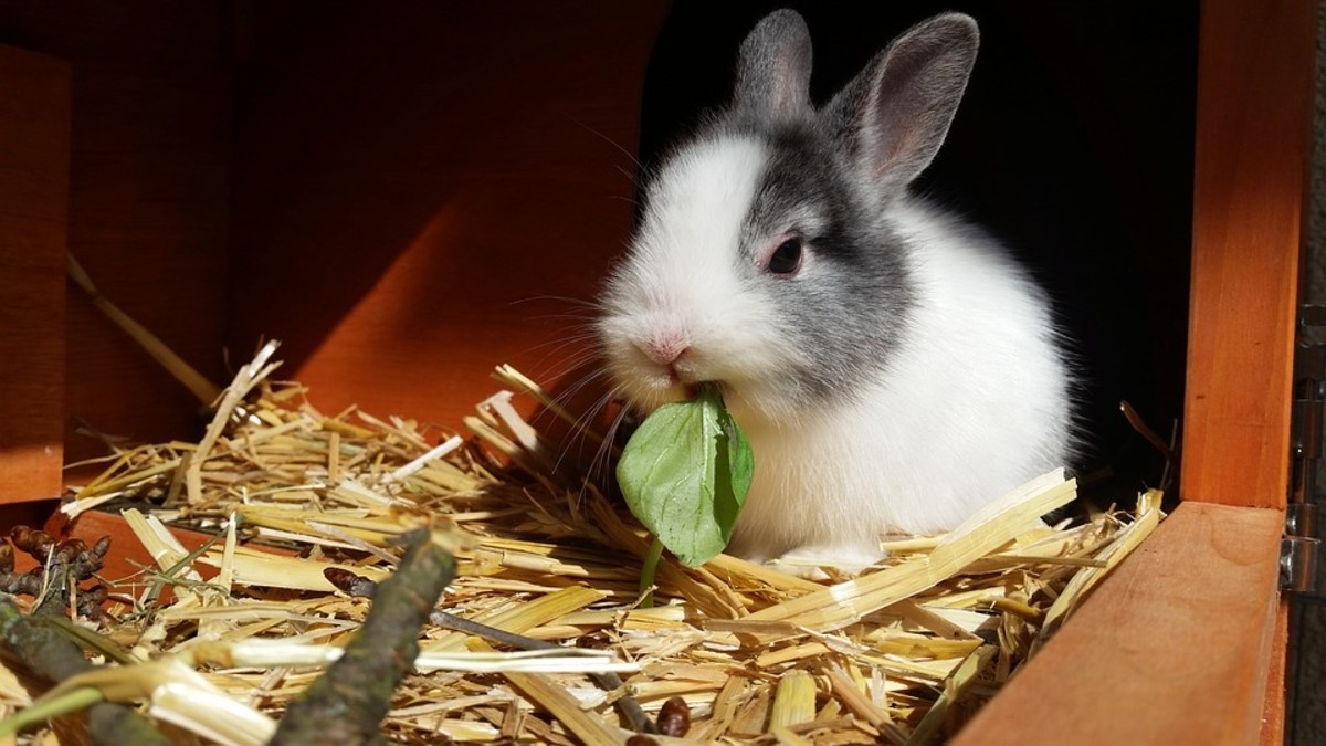 Best Tips to Feed Your Rabbit a Complete Diet