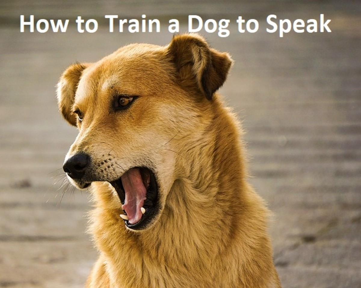 """How to Train a Dog to Bark on Command or """"Speak"""""""