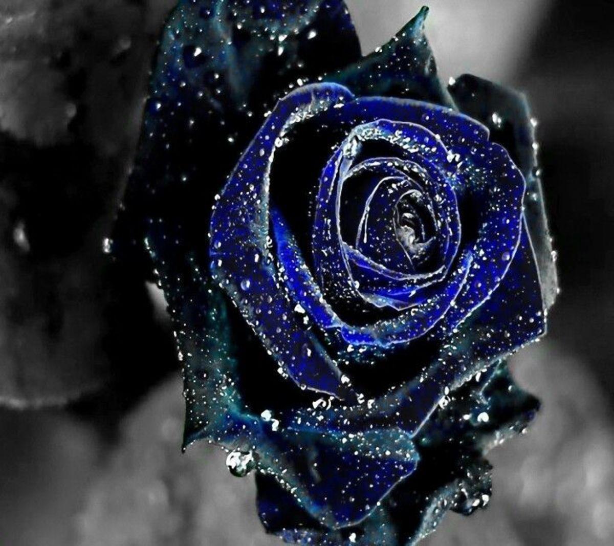 Bitter blue Heart