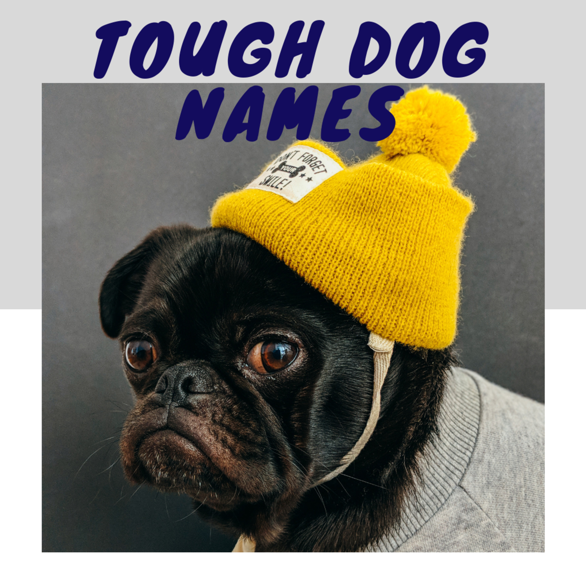 100+ Serious Dog Names For Big, Strong, And Scary Breeds ...
