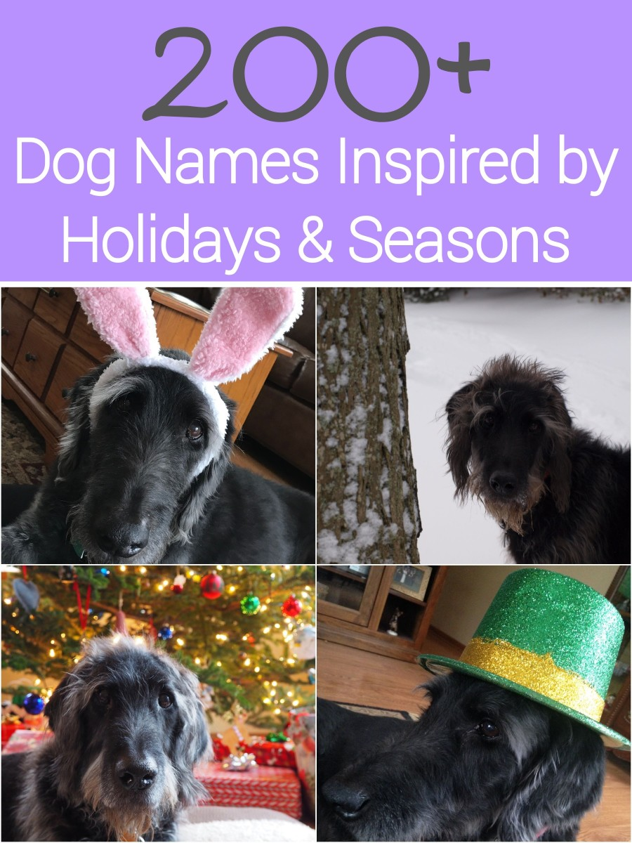 If you love a particular holiday or season, and are looking for a dog name inspired by it, then check out this list of over 200 of them.  You'll find names inspired by all of the major holidays and the 4 seasons.