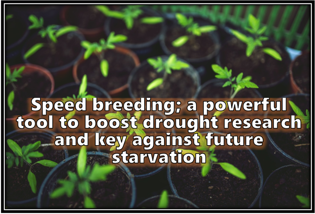 Speed Breeding; a Powerful Tool to Boost Drought Research and Key Against Future Starvation