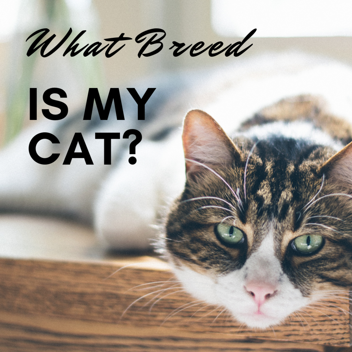How to Determine Your Cat's Breed—Identify Mixed Breeds and Purebreds