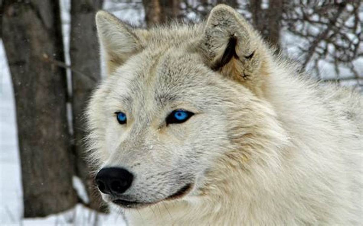 This lonely wolf doesn't have to stand alone anymore.