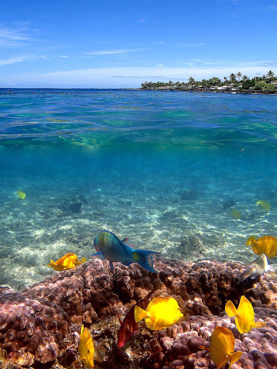 Kahalu'u Beach Park - a snorkeler's paradise!