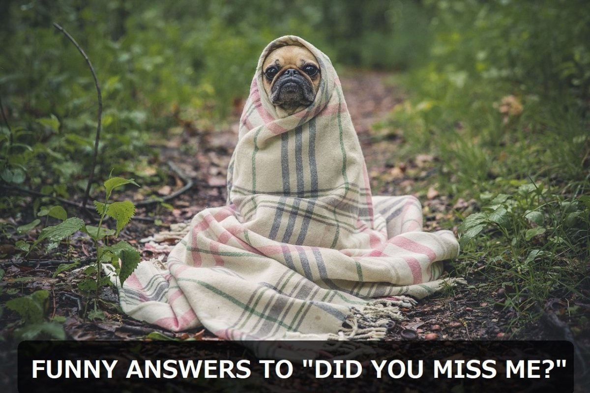 "Funny and Witty Answers to ""Did You Miss Me?"""