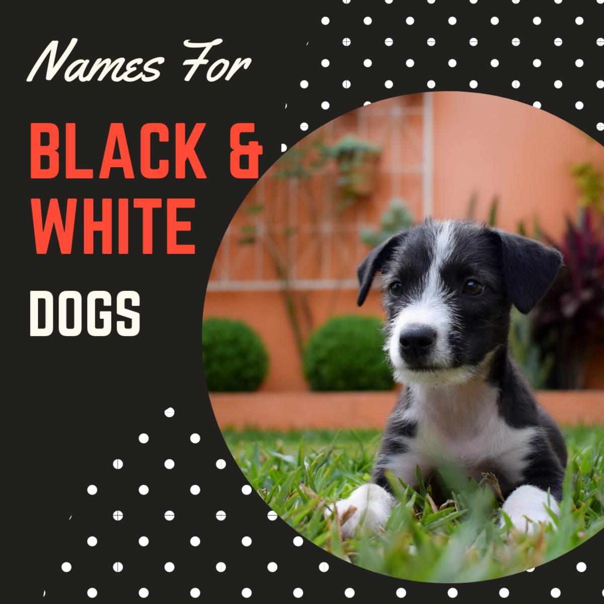 100+ Creative, Cute, and Cool Black and White Dog Names