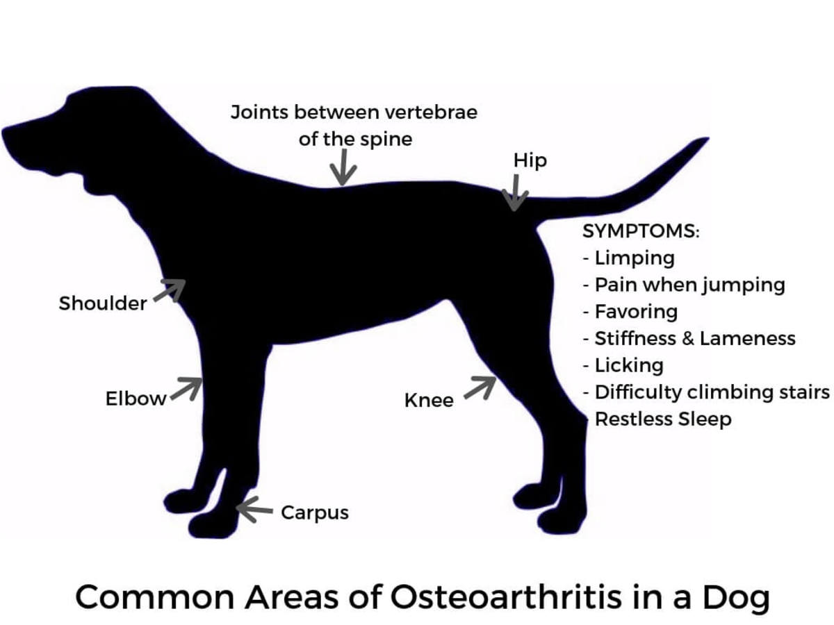 Common Places for Osteoarthritis in Dogs