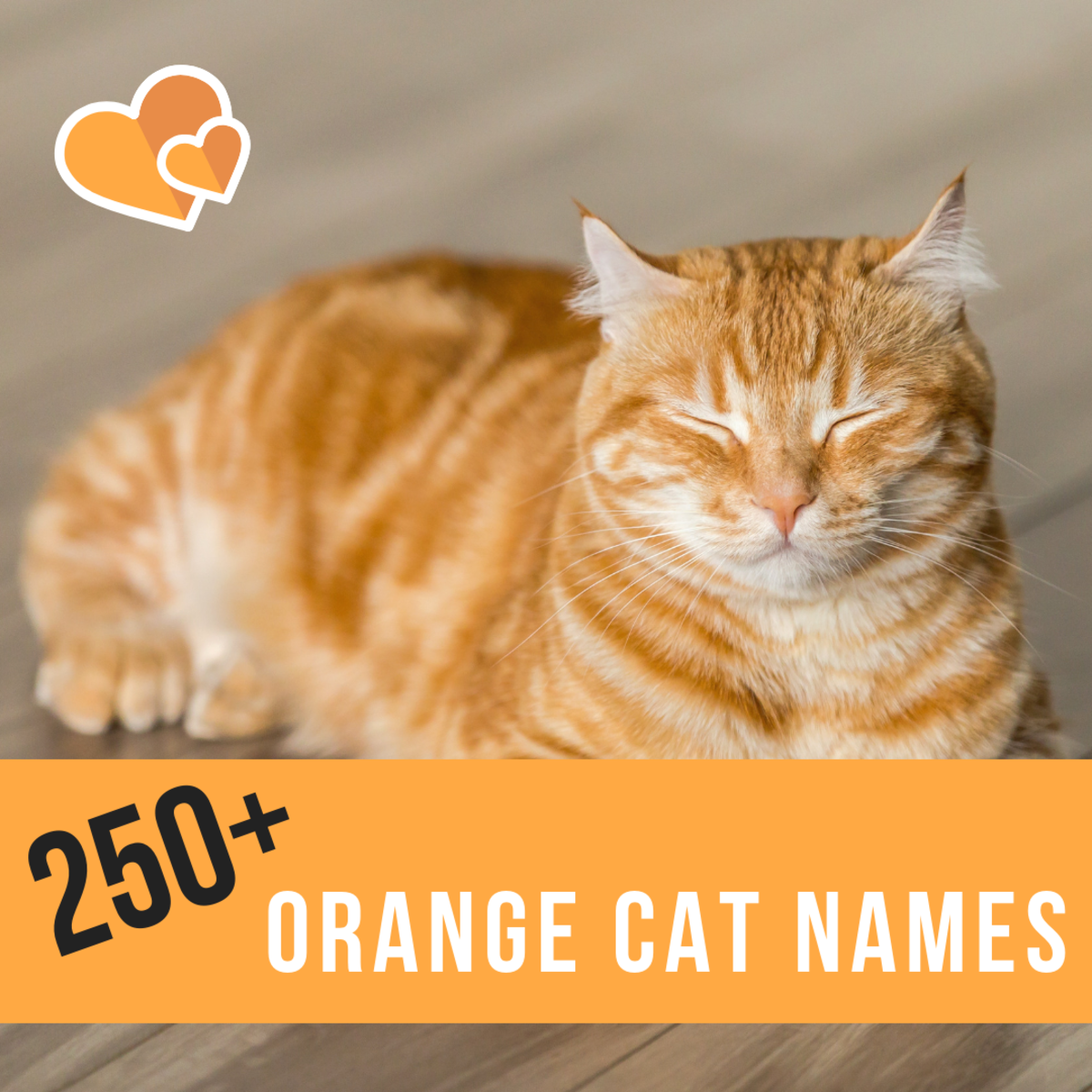 250+ fun orange cat names to choose from.