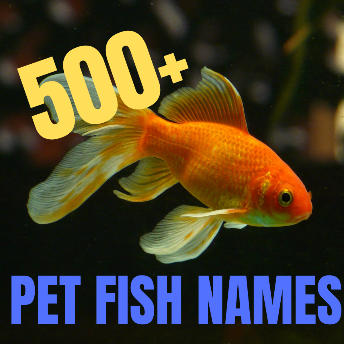 500+ Great Name Ideas for Pet Fish