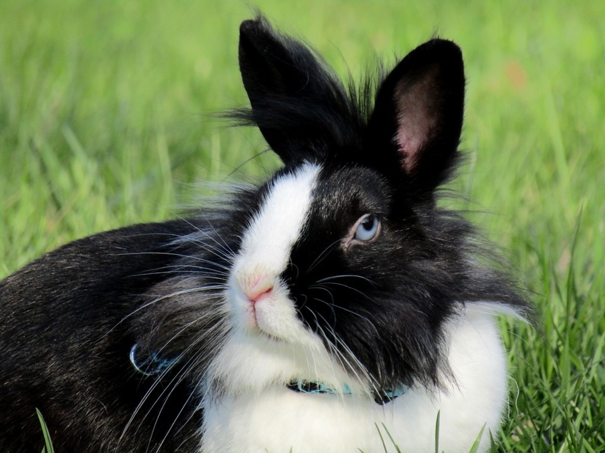 How to Groom Your Rabbit: A Complete Guide