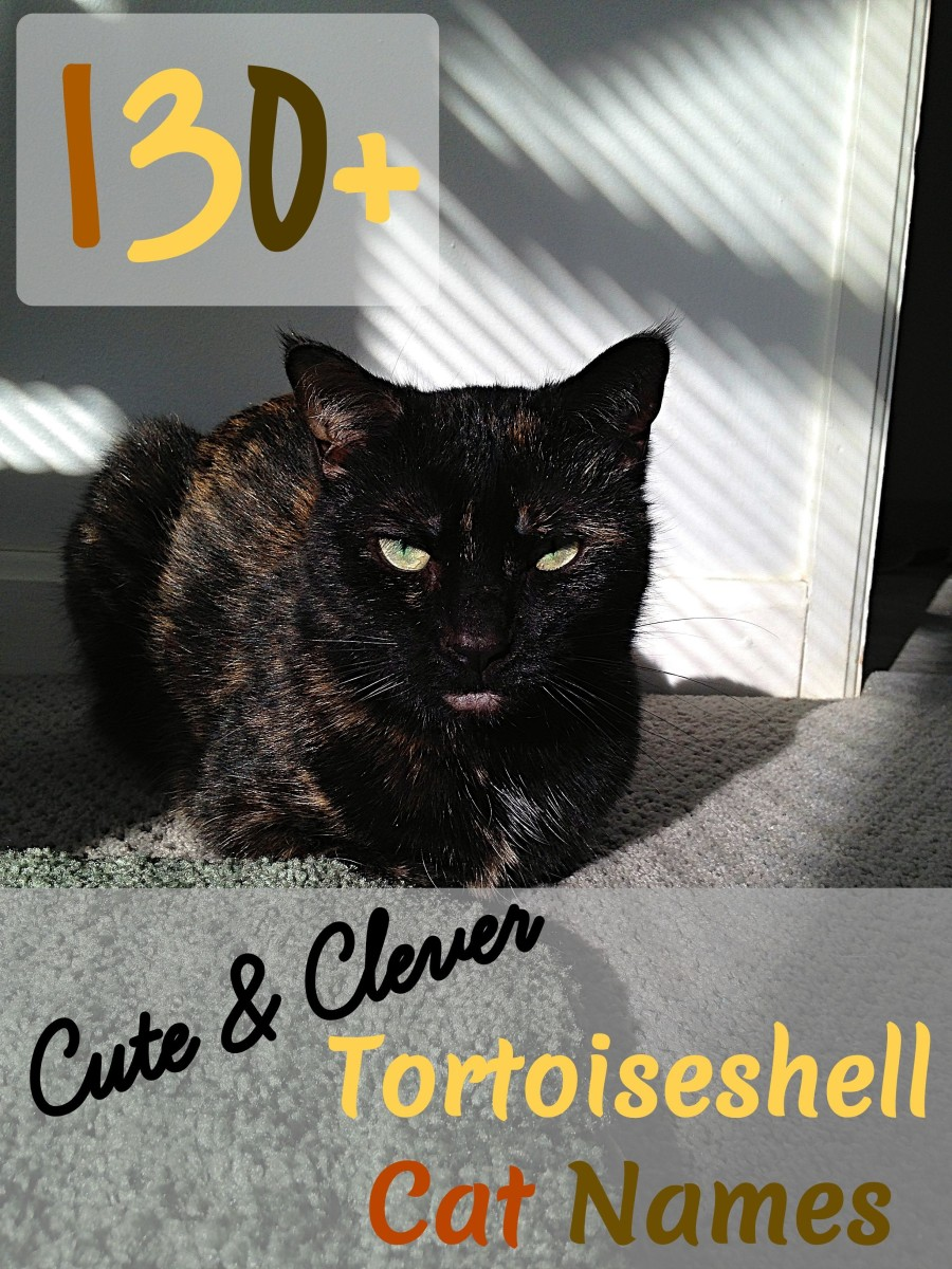 Looking for a name for your tortoiseshell cat?  Then look no further than this list of over 130 of them.  From names inspired by their color to ones based on their personalities, there are plenty to choose from.