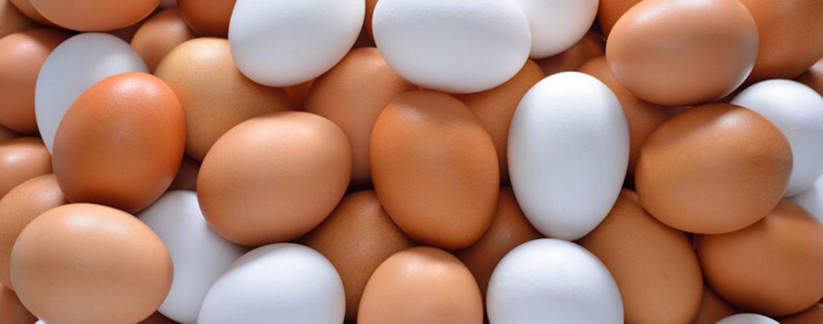 Brown & White Eggs