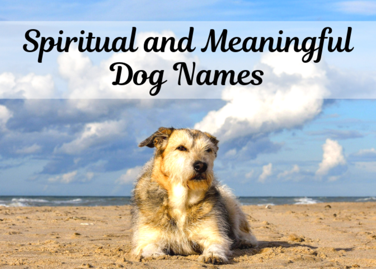 Discover some meaningful names for your dog inspired by spirituality and mysticism.