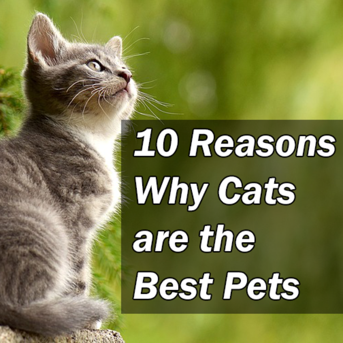 Discover 10 reasons why cats are the best!