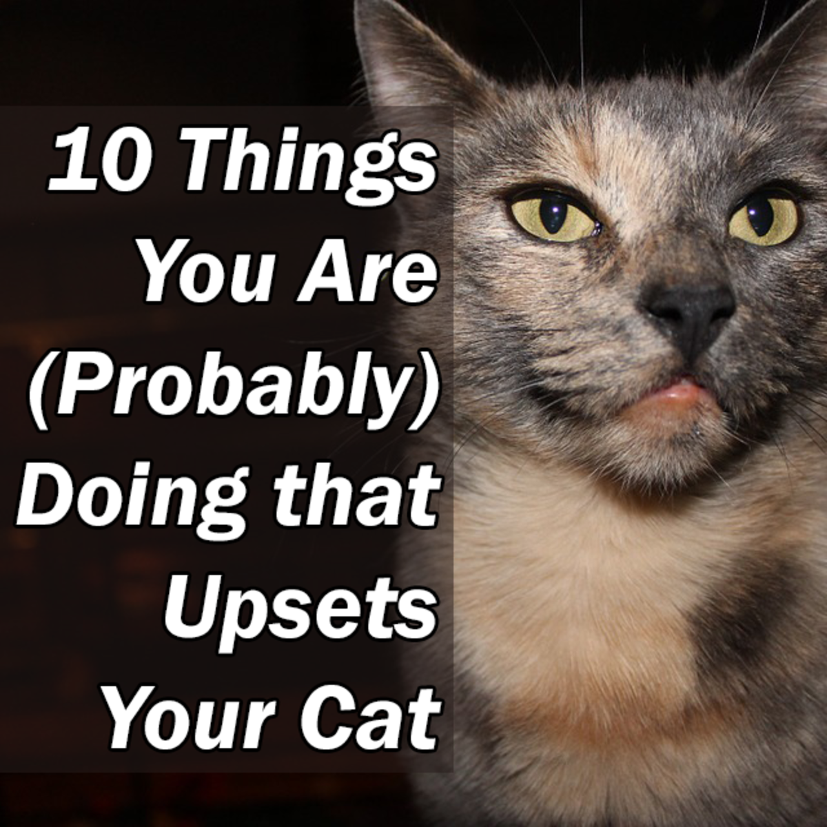 10 Things You Are (Probably) Doing that Upsets Your Cat