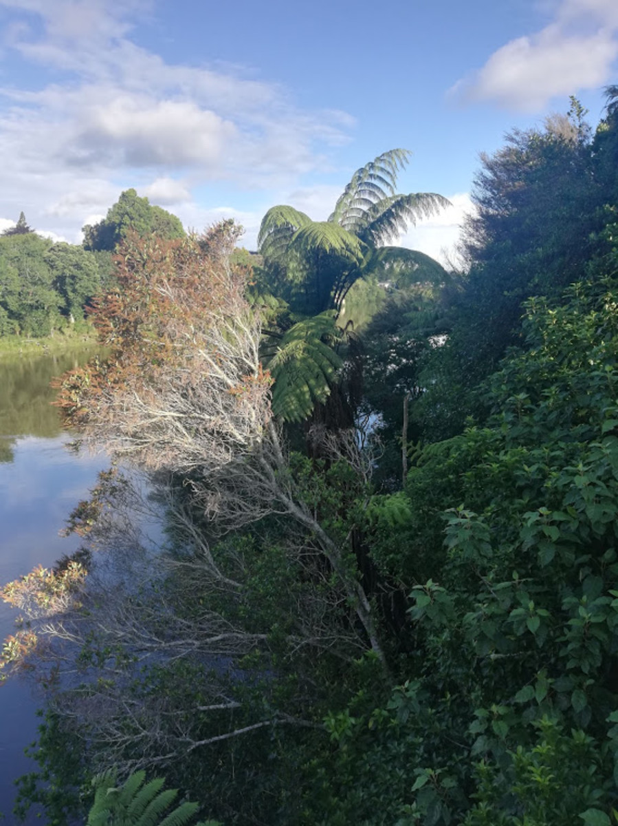 Kiwi Christmas:  A Walk Along the Waikato River, Hamilton, New Zealand