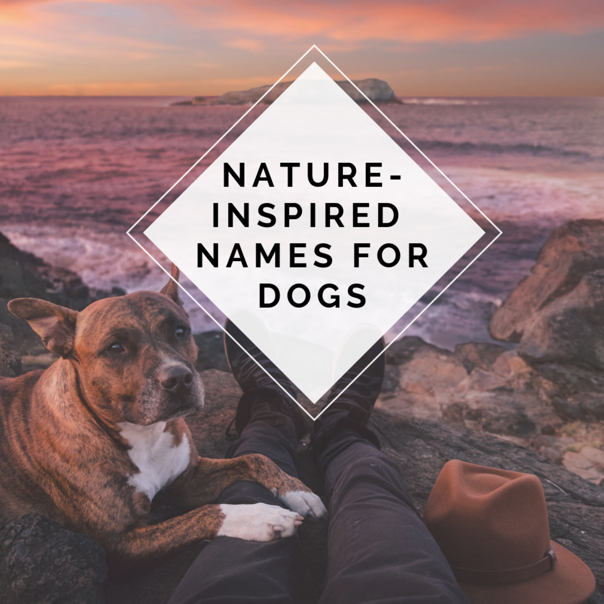 Names inspired by nature for dogs.