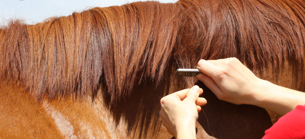 Mane pulling can be a tedious task!