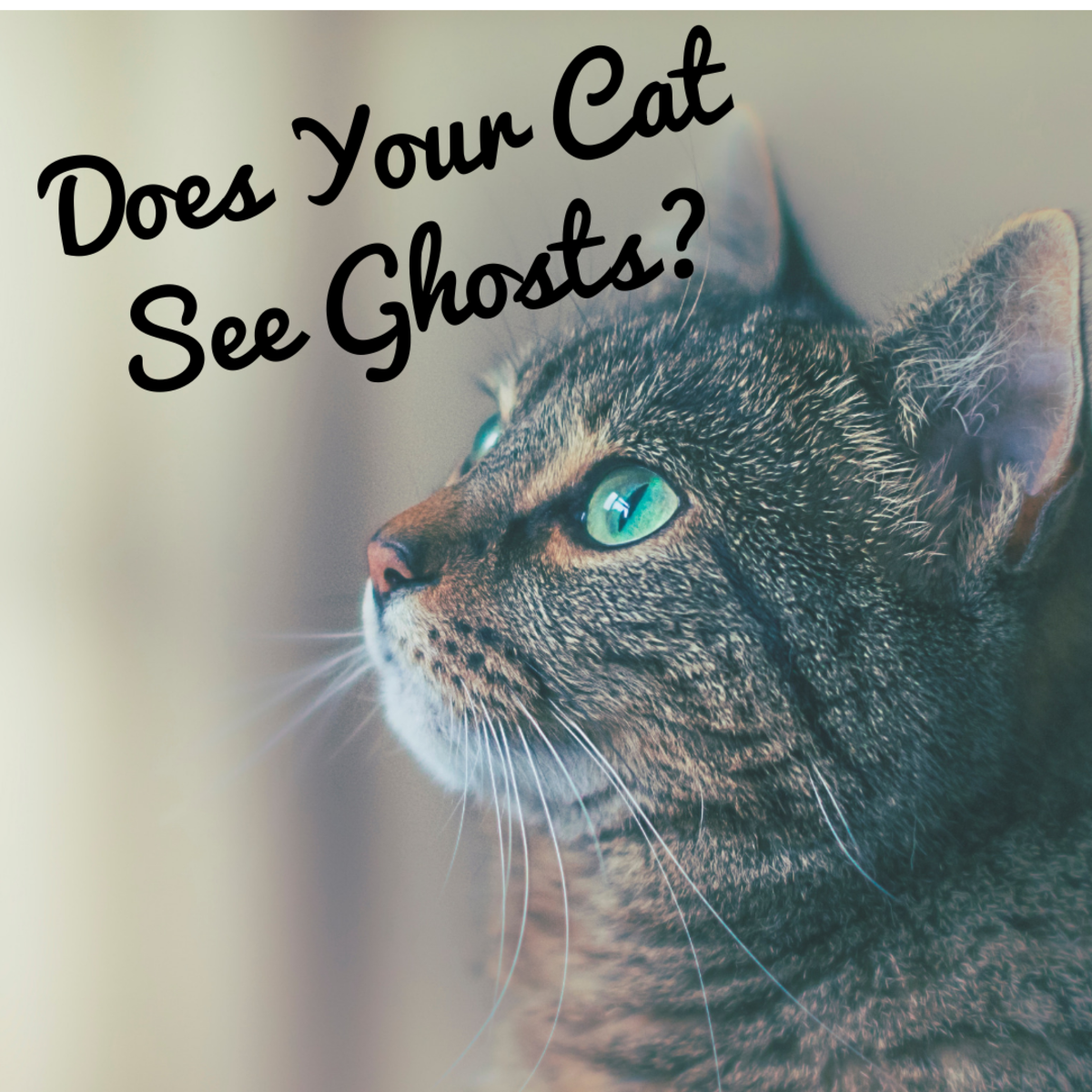 Do cats see ghosts?