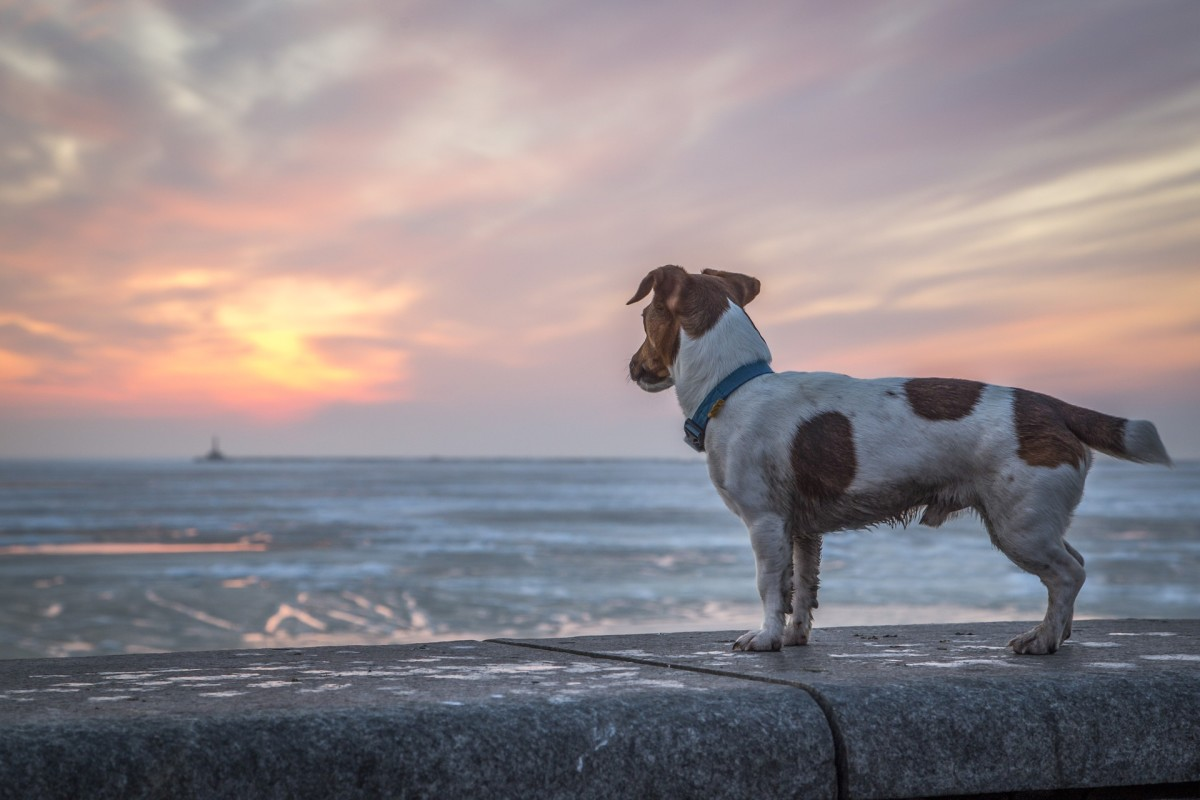 How to Start a Lost Pet Page for Your City in 6 Easy Steps