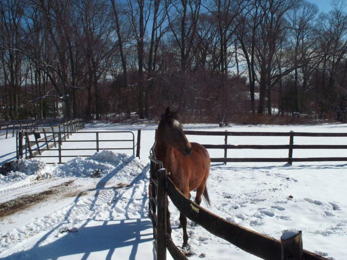 Keeping a Horse: Stall Board vs. Field Board