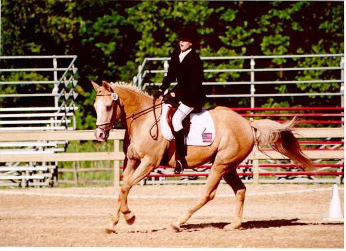 Here I am using a dressage whip. In competitions there are limitations on how long your whip can be. If you are competing, make sure you know the restrictions.