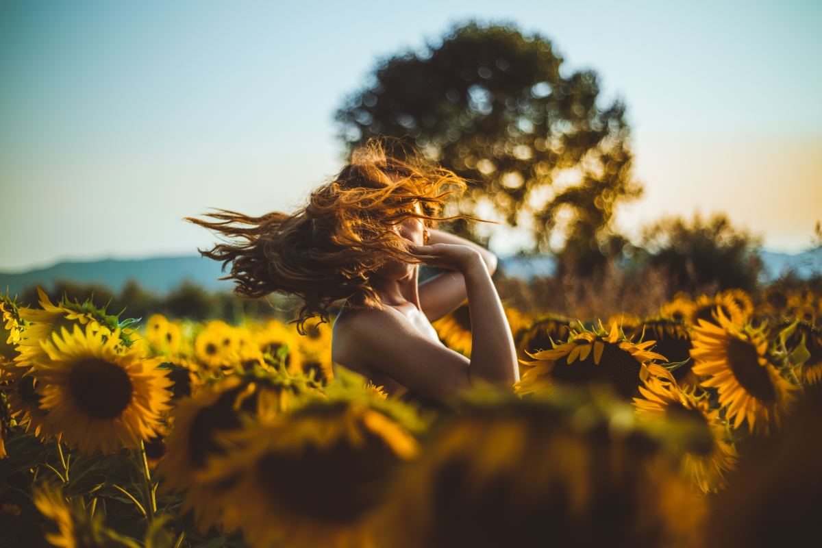 Entrancing Sunflowers