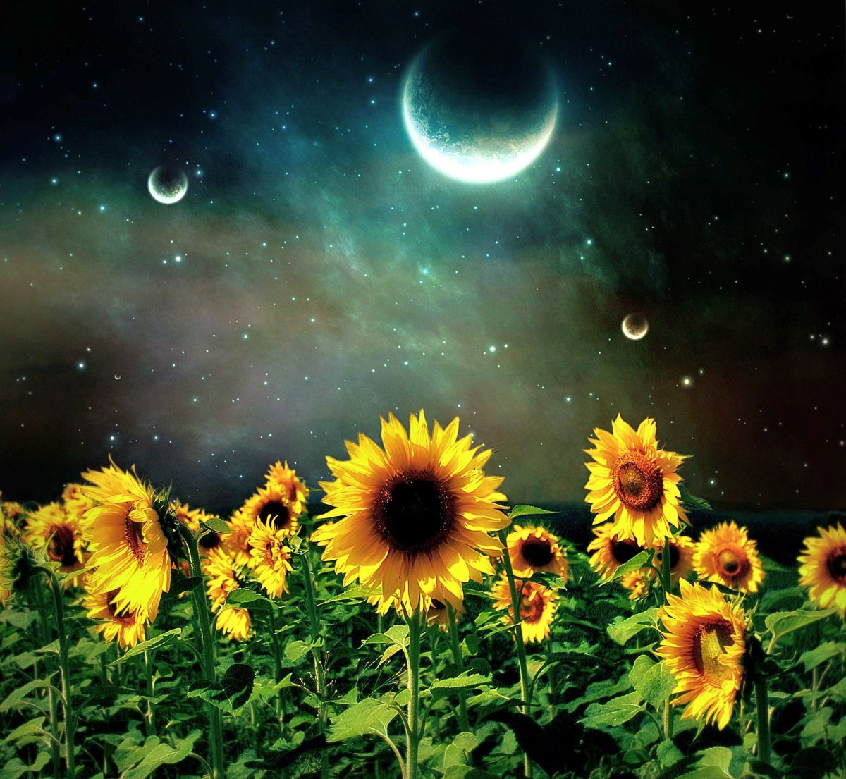 Sunflower's Moon