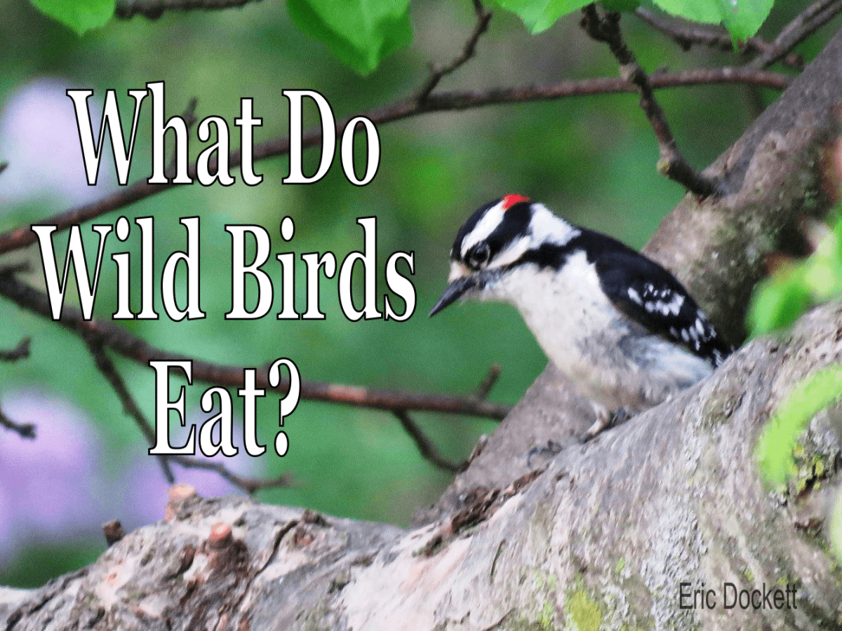 What do birds eat in the summer and winter?