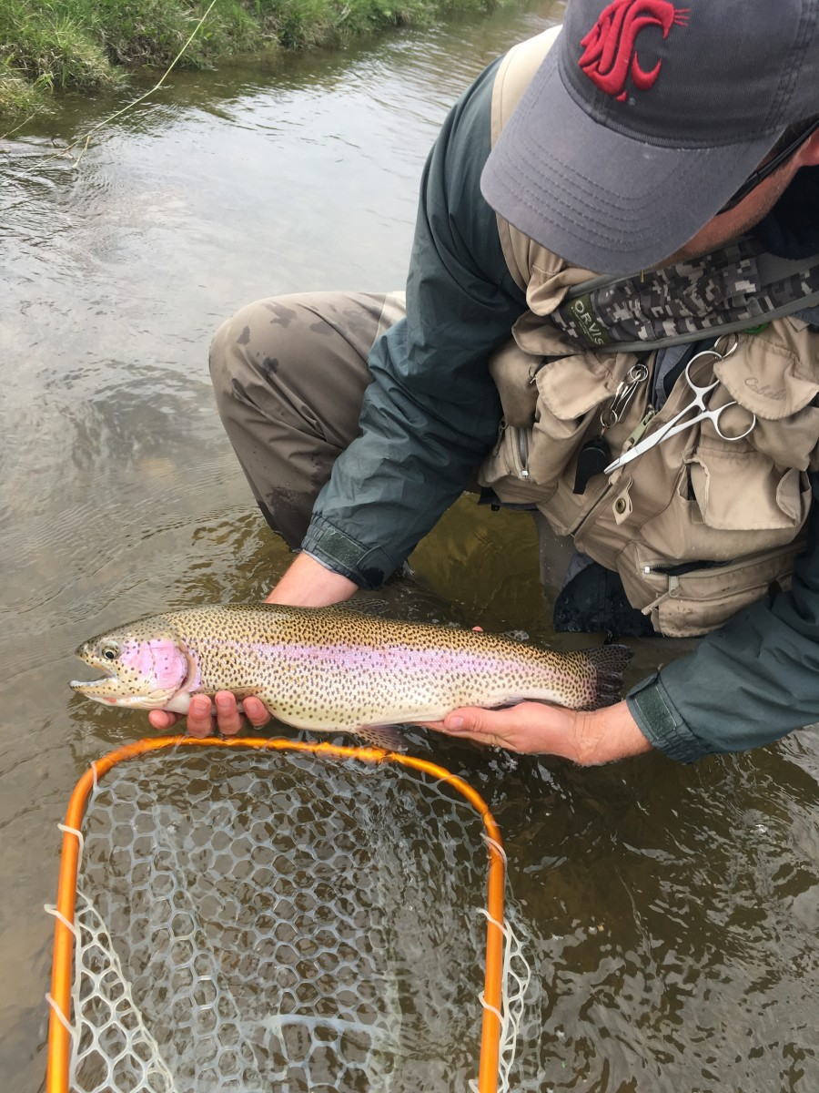 Fly Fishing Wyoming's Ham's Fork River
