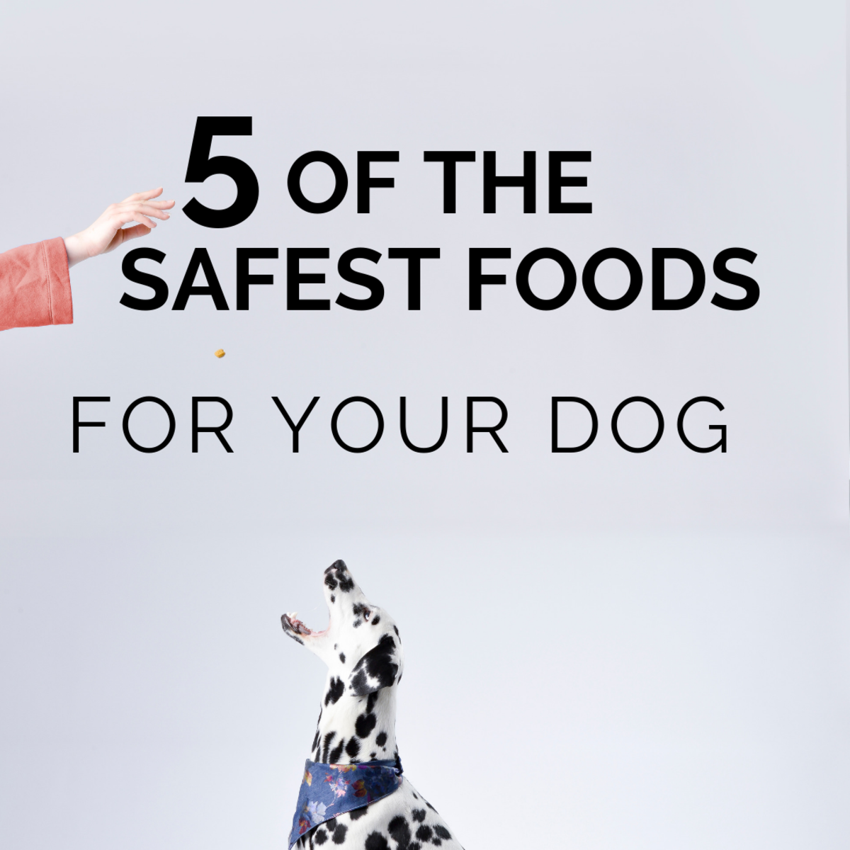 Safe Foods for Your Dog