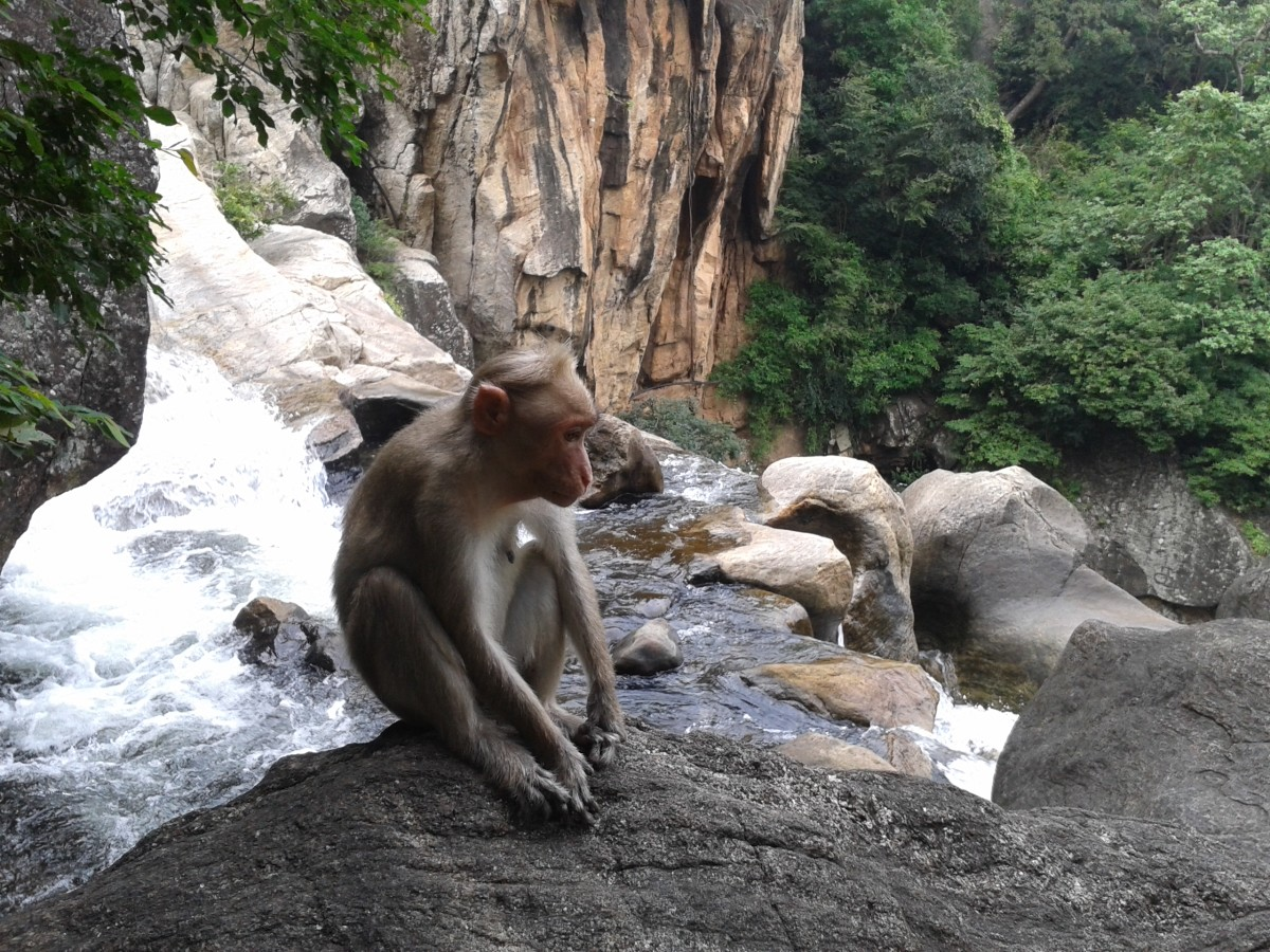 Top 10 Places to Visit in Courtallam
