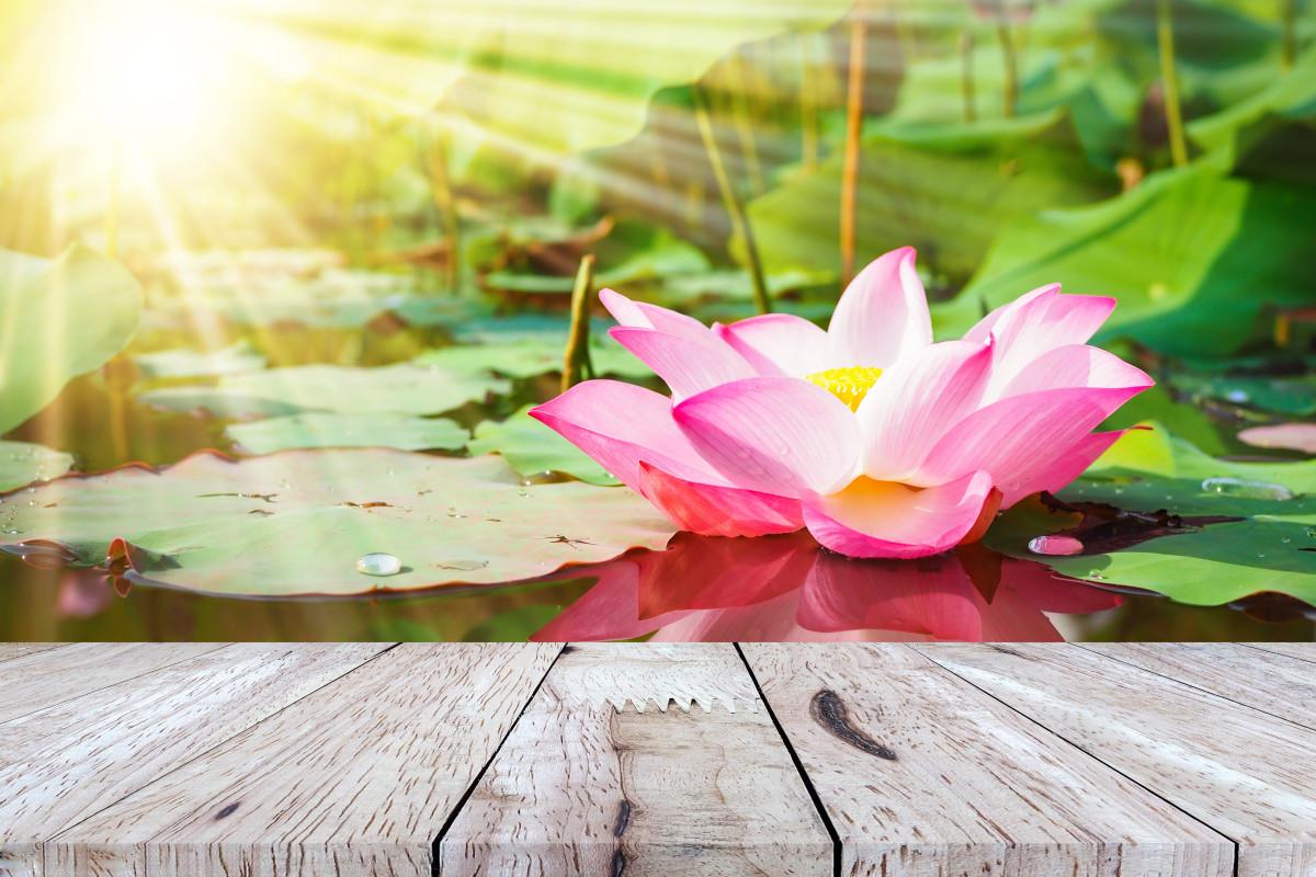 Lotus flower for focus - © apimook