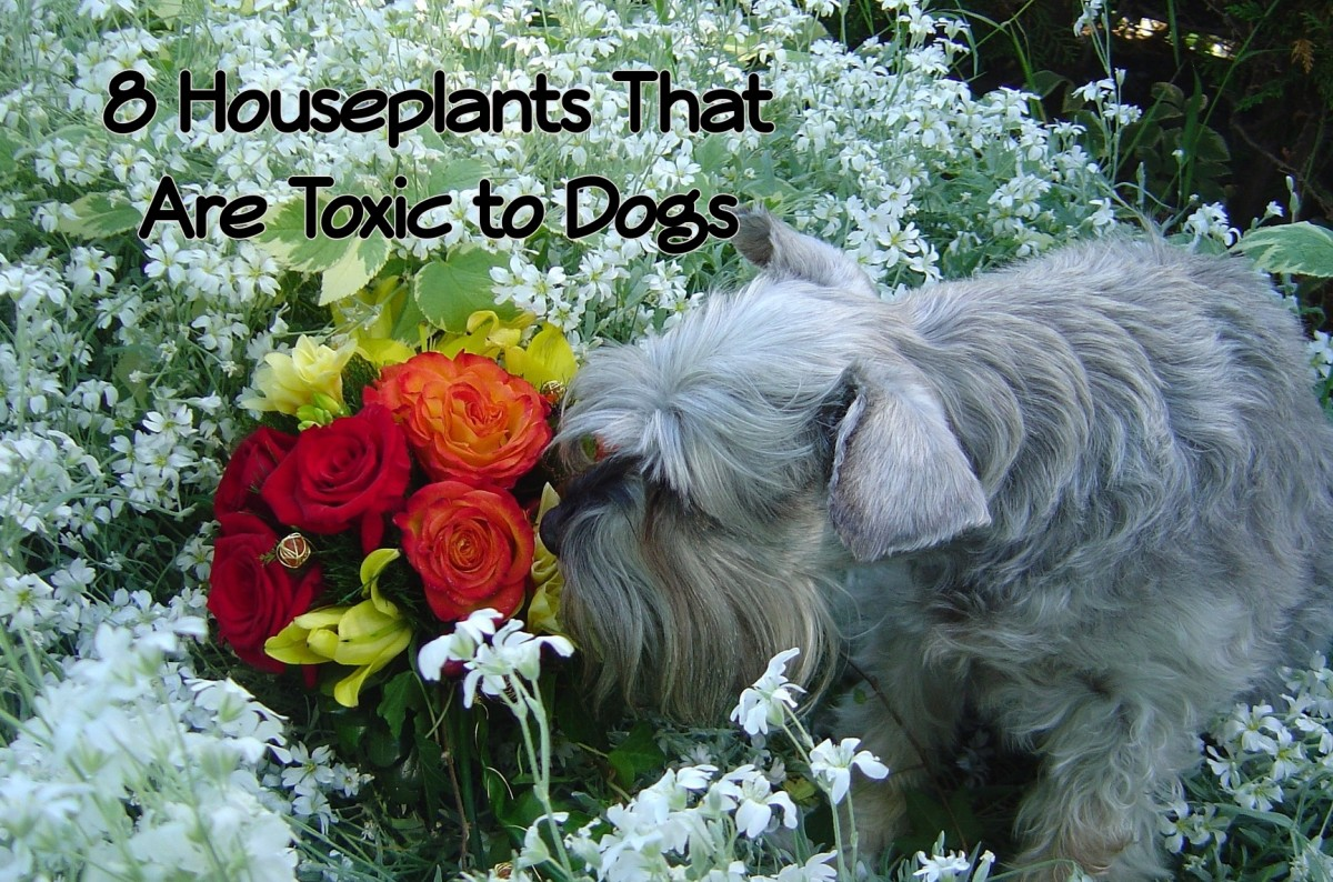 8 Common Houseplants That Are Poisonous to Dogs