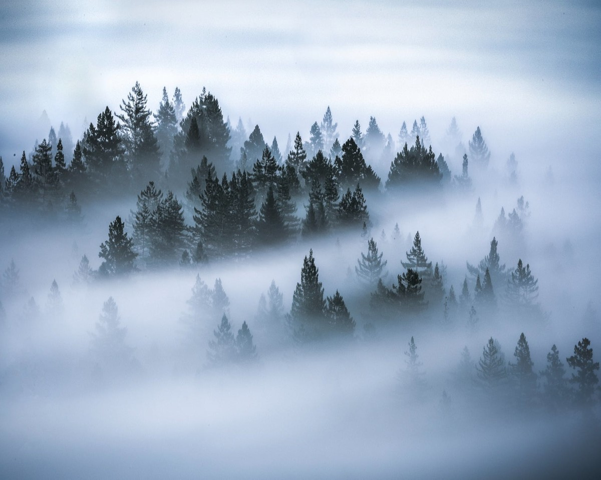 the-unseen-world-of-trees