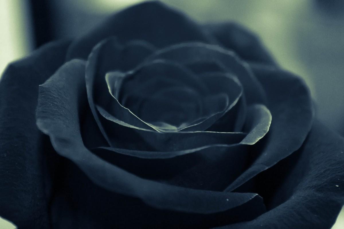 The Heartache of Lost Love