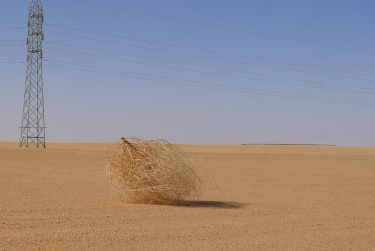 Tumbleweeds: Lonesome and Very Important.