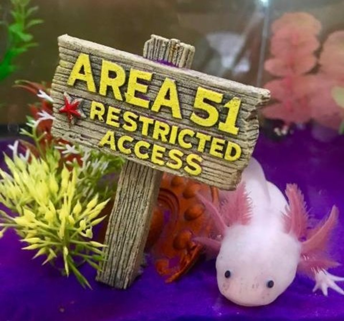 5 Food Options For Axolotls
