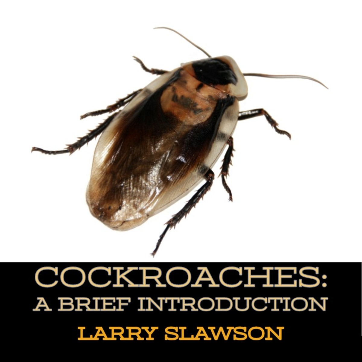 Cockroaches: A Brief Introduction