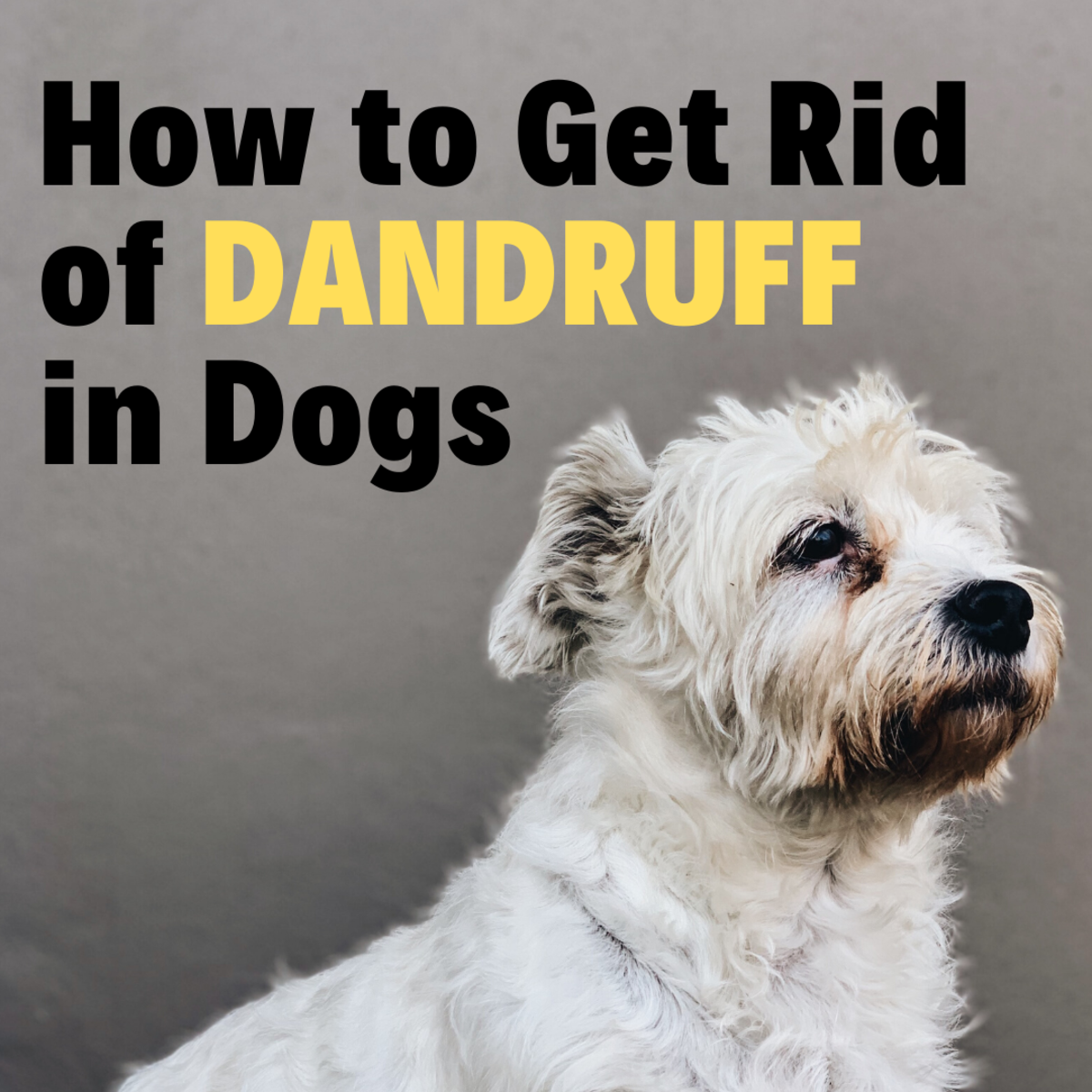 Both dry and greasy dandruff can cause your dog to itch excessively.