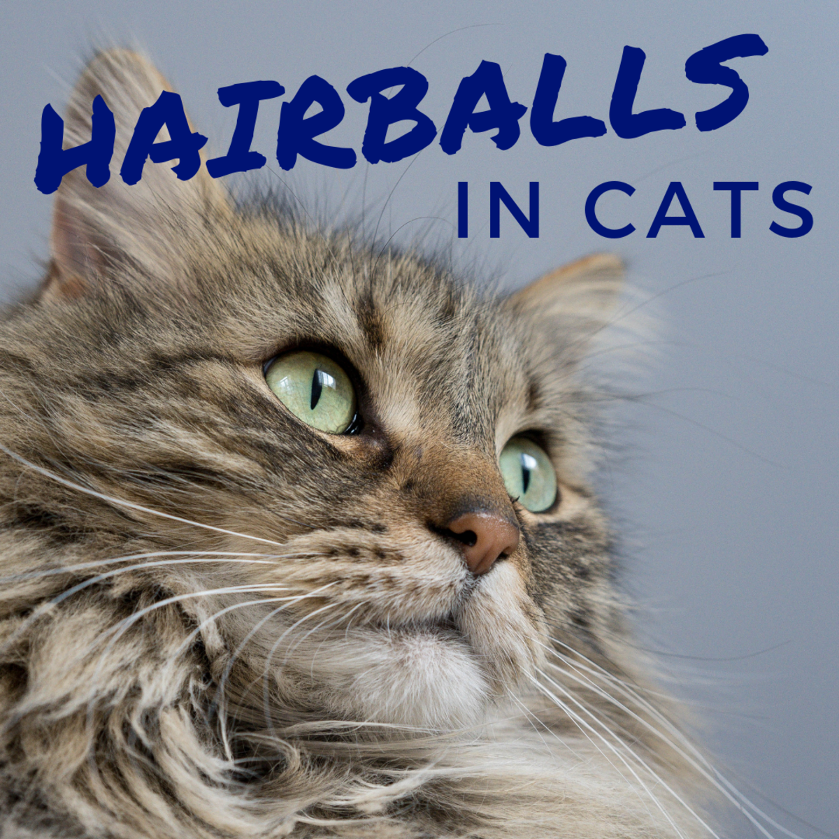 How to Prevent and Treat Hairballs in Cats