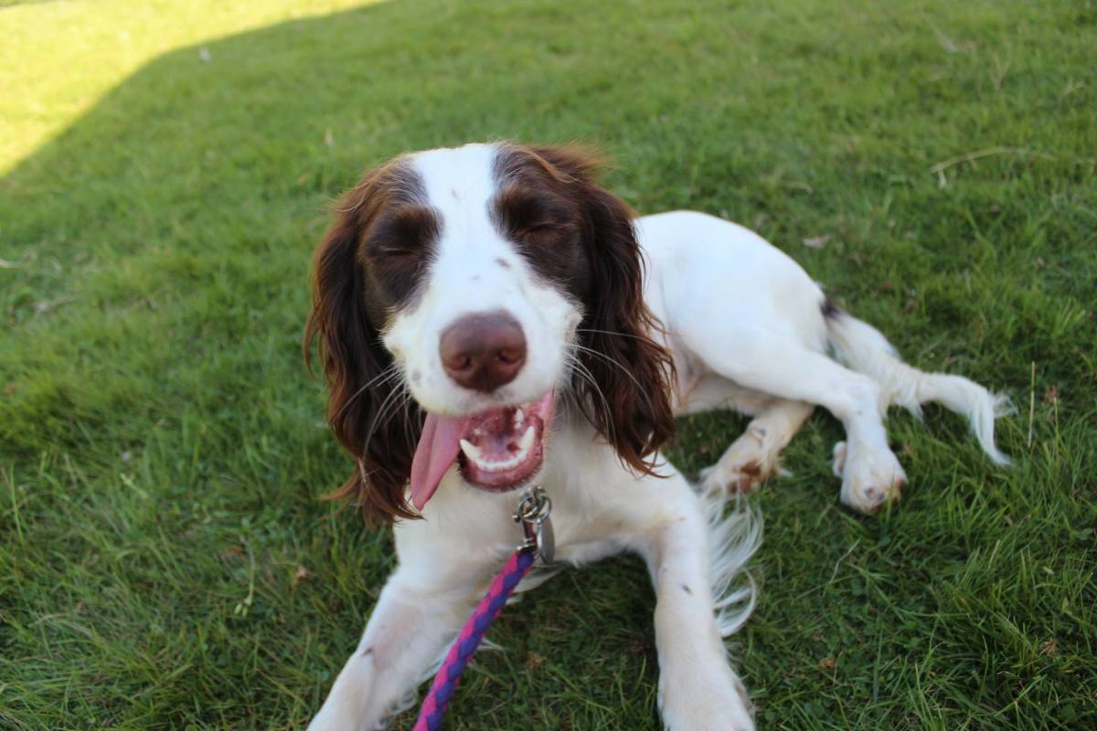 10 Ways to Keep Your Dog Cool in Summer