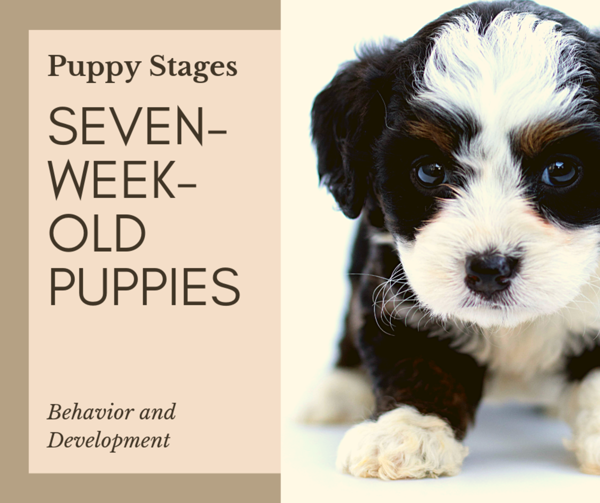 At seven weeks, your puppy is developing some crucial physical traits and social skills. Here is an overview of those that are important to monitor.