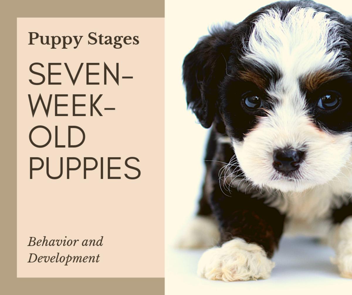 Puppy Stages: Seven-Week-Old Puppy Behavior and Development