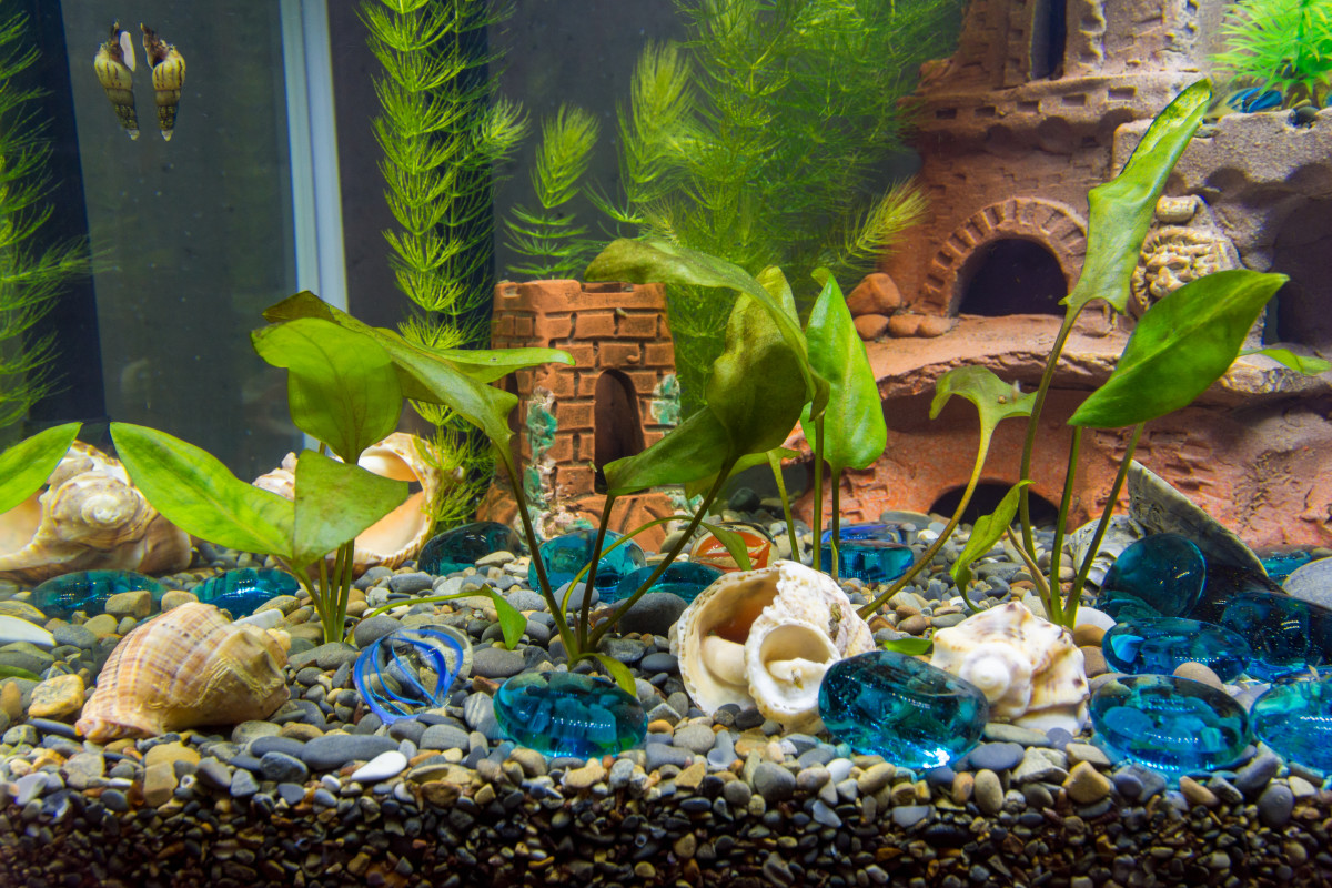 Aquarium plants are much more than just a pleasant decoration. They provide shelter and oxygen and can remove some fish waste.