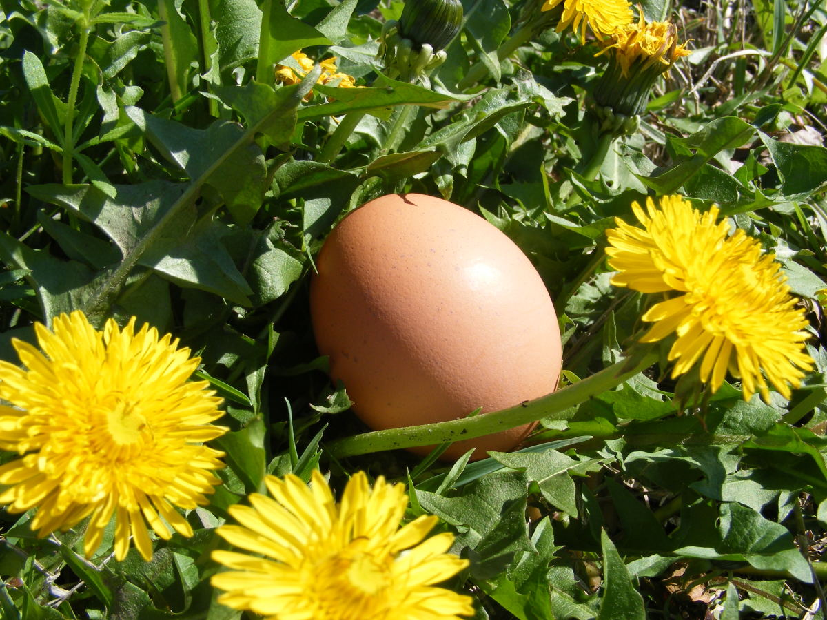 Hens will sometimes lay their eggs in hard-to-reach places. There are tools to help.
