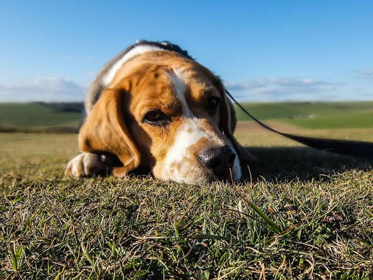 Will Dog Pee Kill Grass and Plants?
