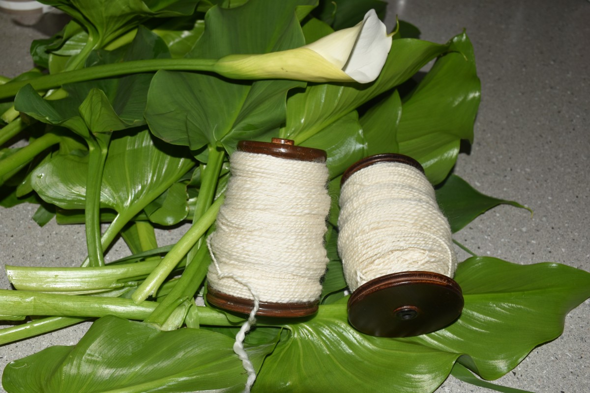Arum Lily leaves and wool to be dyed.