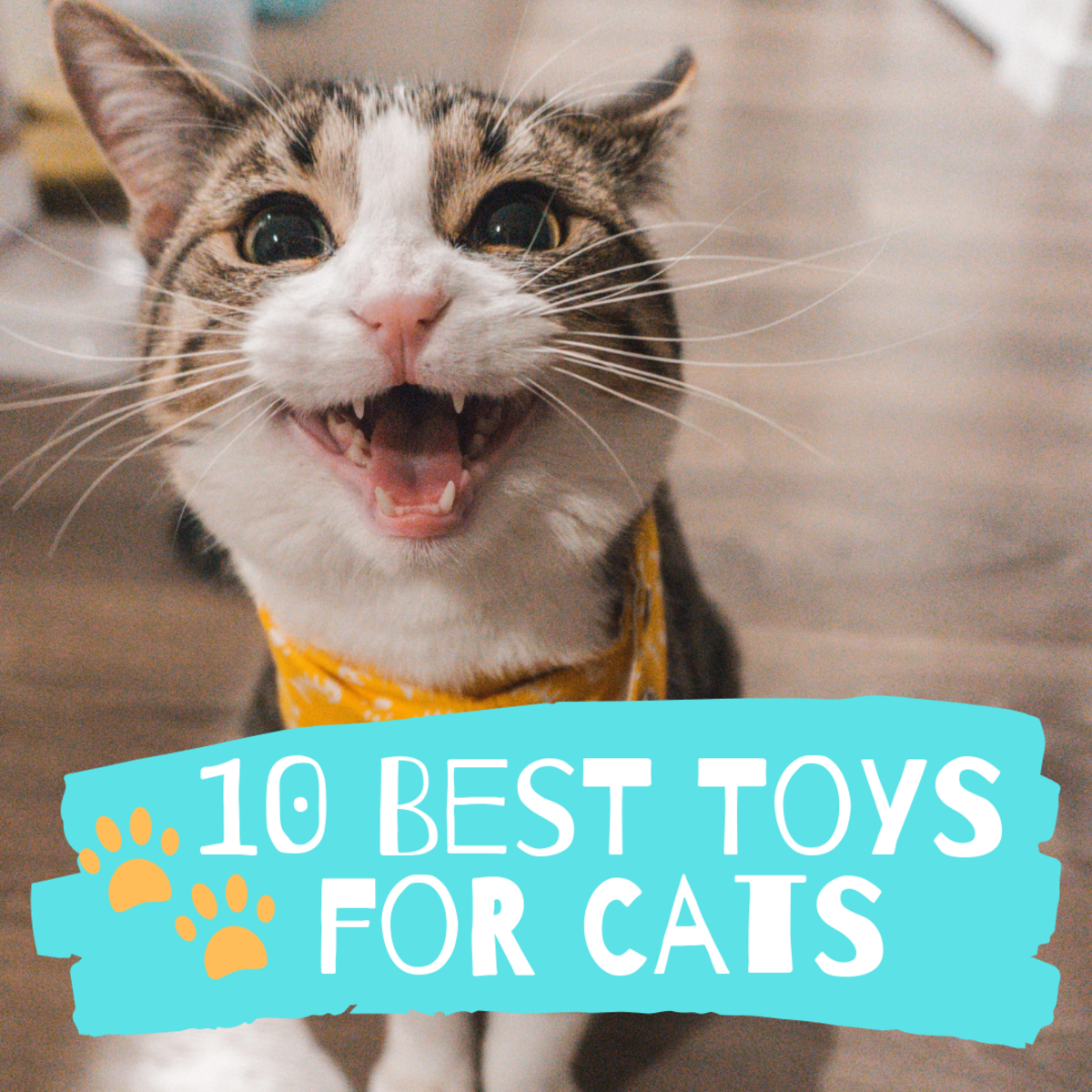 10 Top-Rated Toy Gifts for Cats for 2019